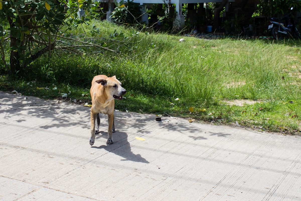 Собака. Друг человека