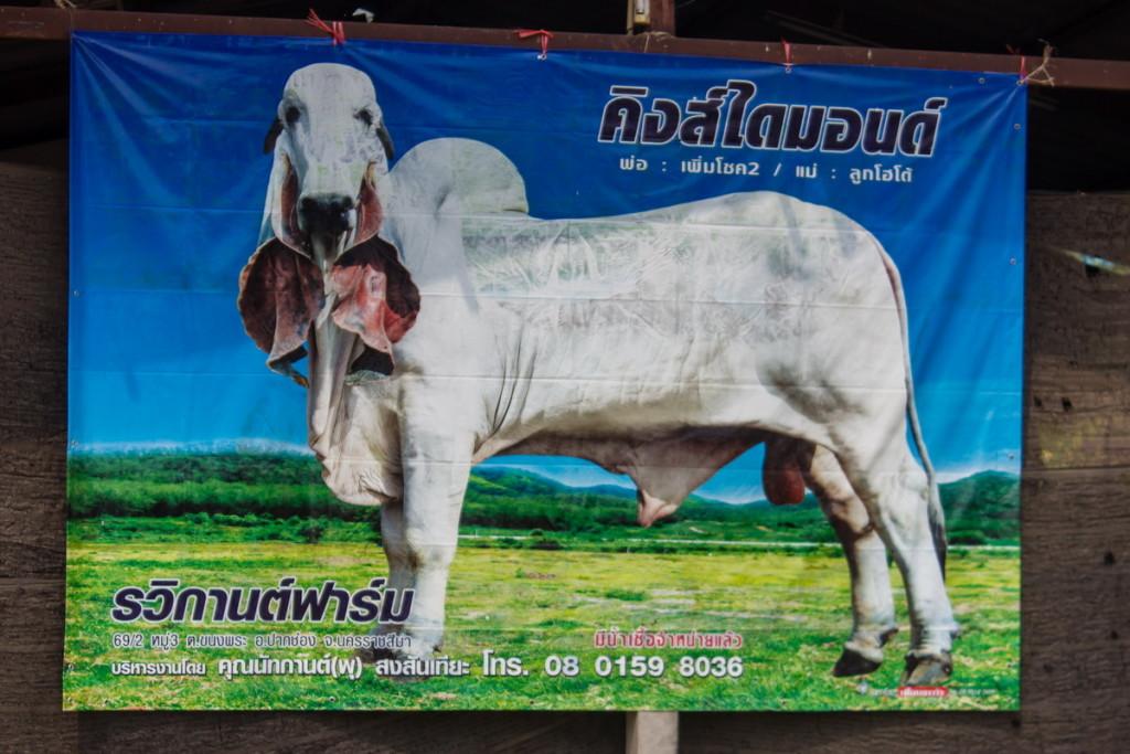Плакат с блякоровой