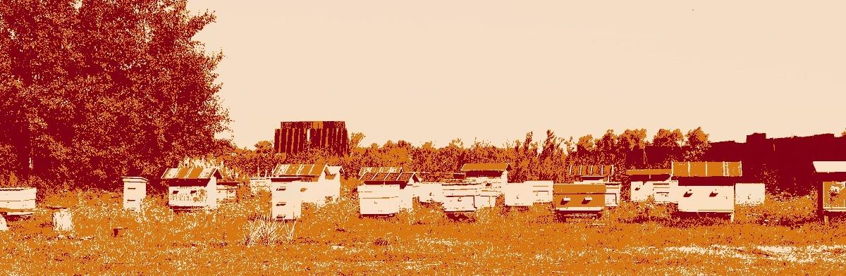 honey-bee-garden